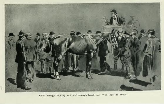 horse auction