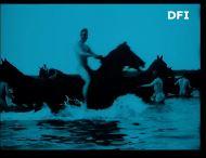 Danish horses swimming