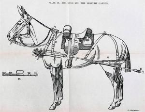 mule-harness