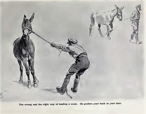 mule-leading-galtrey