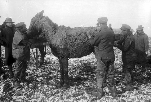 muddy mule.jpg
