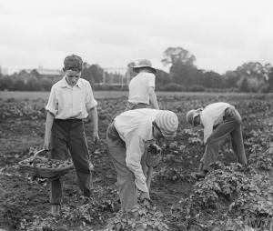 eton-schoolboys-potatoes-iwm
