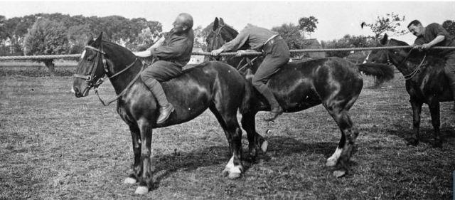 tug-of-war-horseback-iwm-q17364