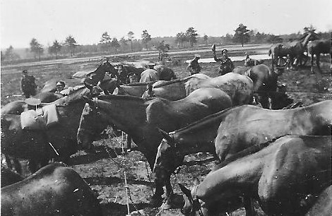 79 Horse Lines Frensham Pond crop.jpg