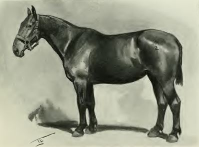 field gun horse Galtrey page 25.JPG