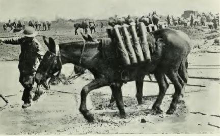 Galtrey pack mule.JPG